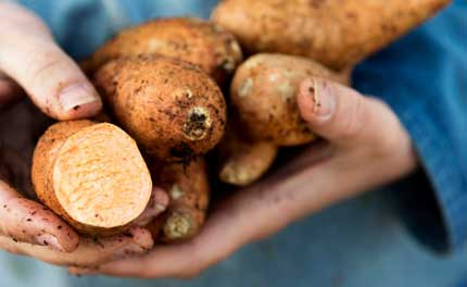 Sweet Potato Nutrition and health benefits