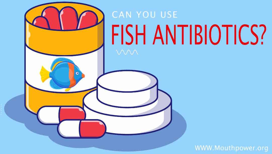 Can You Use Fish Antibiotics To Safely Treat Human Teeth Infections?
